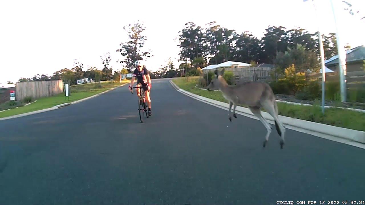 Ciclisti contro canguri